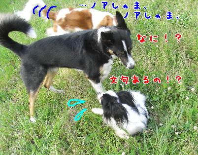 d0013149_1048573.jpg