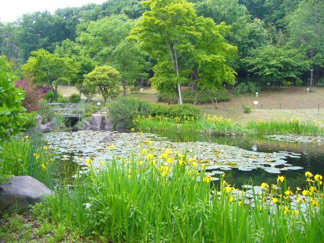 2008年5月17日(土)寅ちゃんと実家と京成バラ園!_f0060461_1729985.jpg