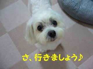 f0145192_16425127.jpg