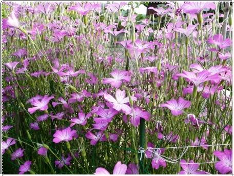 白い花のサボテン_c0079206_19161310.jpg