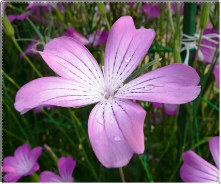 白い花のサボテン_c0079206_19162627.jpg
