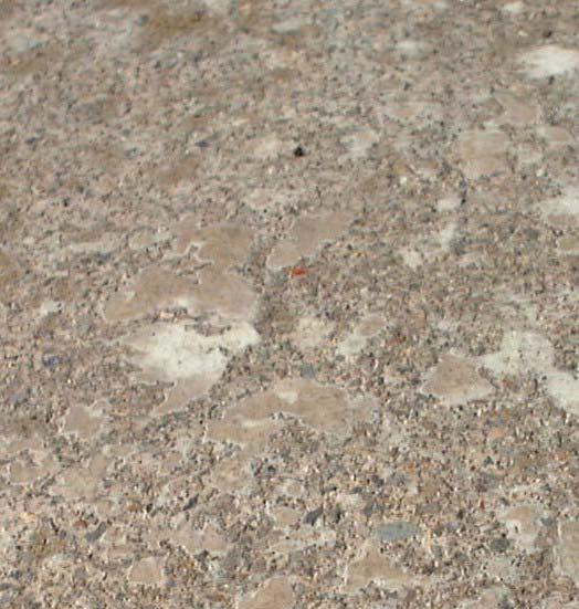 庭の縁石に0.5ミリぐらいの赤い虫が多数います_b0025008_16572424.jpg