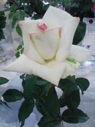un jour en rose_c0089310_2142482.jpg