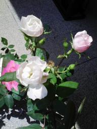 un jour en rose_c0089310_2151530.jpg
