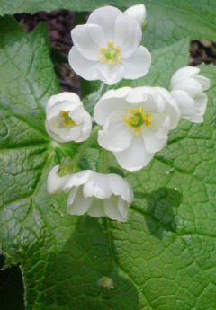 ようやく新緑の季節です!_f0101226_750122.jpg