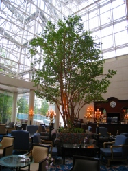 4月 ウェスティンホテル大阪 アマデウス_a0055835_2129314.jpg