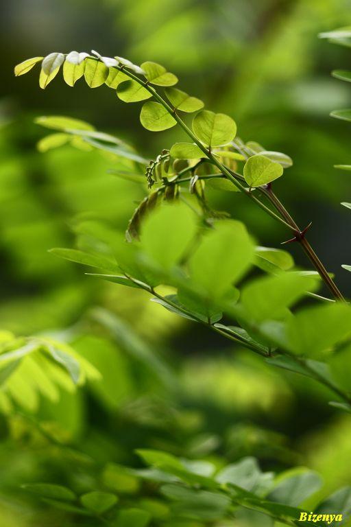 緑とリラックス!?・・・_d0086248_1323322.jpg
