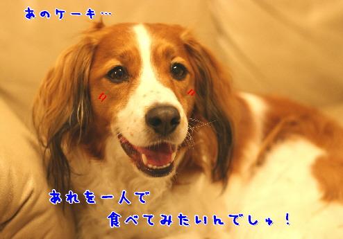 d0013149_00498.jpg