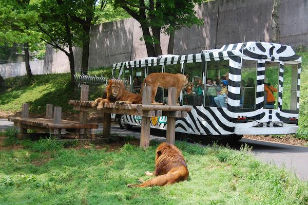 多摩動物公園 チーターの赤ちゃん_a0003650_8445035.jpg
