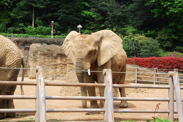 多摩動物公園 チーターの赤ちゃん_a0003650_84745100.jpg