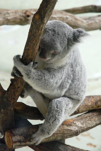 多摩動物公園 チーターの赤ちゃん_a0003650_8513463.jpg