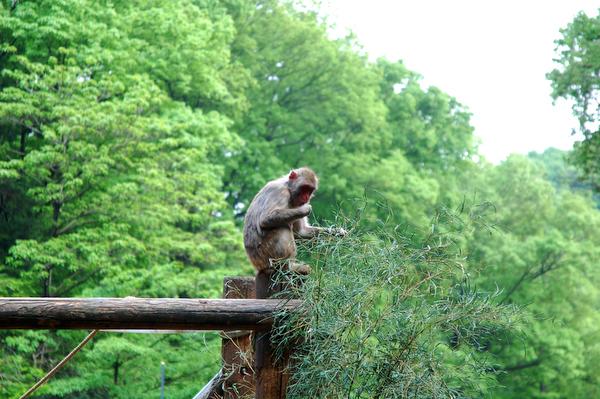 多摩動物公園 チーターの赤ちゃん_a0003650_8534025.jpg