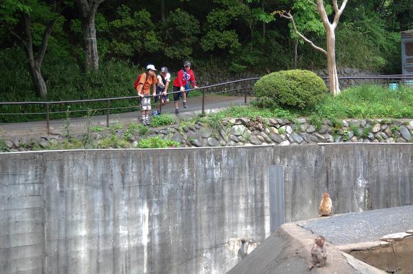 多摩動物公園 チーターの赤ちゃん_a0003650_8542536.jpg