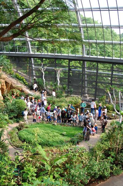 多摩動物公園 チーターの赤ちゃん_a0003650_8552989.jpg