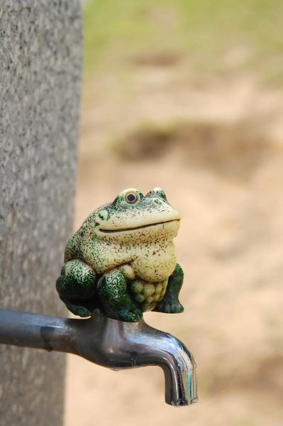 多摩動物公園 チーターの赤ちゃん_a0003650_8572623.jpg