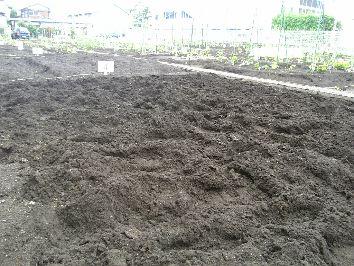 市民農園の土作り_c0053863_23310100.jpg