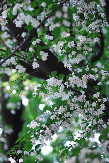 ベッカライ ブロートハイムのモーンクーヘン*桜新町_e0140171_15433873.jpg