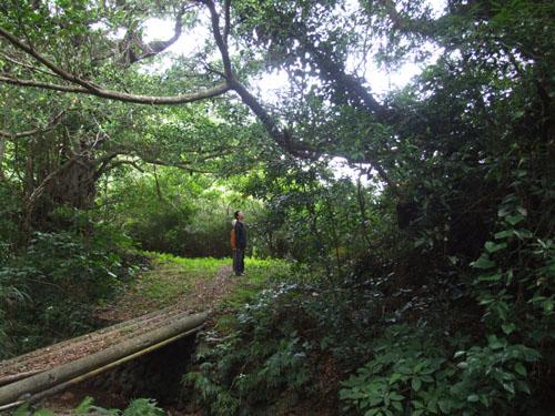 ご主人が愛した加計呂麻島の海_e0028387_23212264.jpg