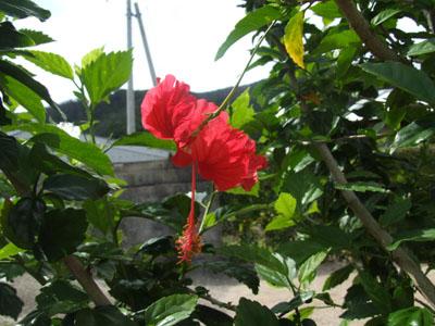 ご主人が愛した加計呂麻島の海_e0028387_23393765.jpg