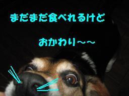d0104209_220123.jpg