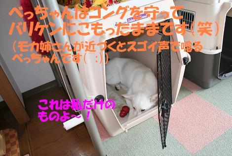 f0121712_12355162.jpg