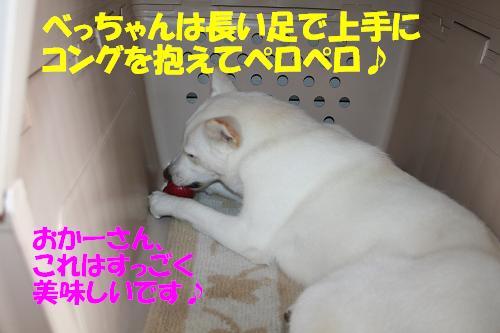 f0121712_1235664.jpg