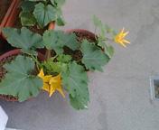 花盛り_f0101128_8472739.jpg