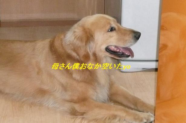 f0114128_2395566.jpg