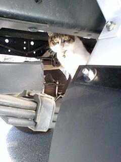車の下からこんにちは_a0075738_971440.jpg