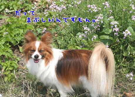 d0013149_200679.jpg