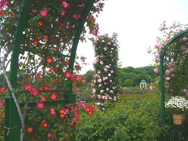 2008年5月17日(土)寅ちゃんと実家と京成バラ園!_f0060461_19311797.jpg