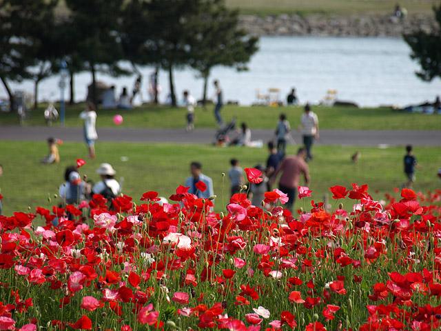 葛西臨海公園 (5/18)_b0006870_1237647.jpg