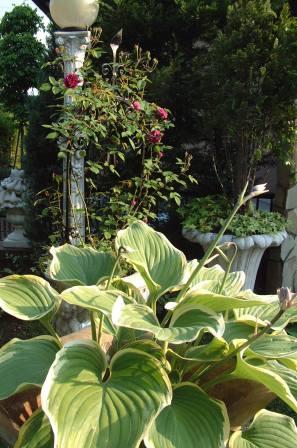 バラも咲き始めました♪   _f0029571_1013248.jpg