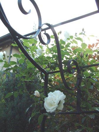 バラも咲き始めました♪   _f0029571_10141341.jpg
