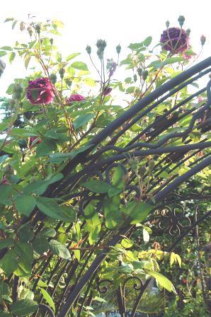 バラも咲き始めました♪   _f0029571_1073431.jpg