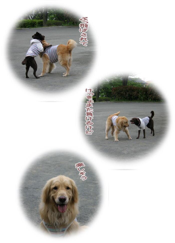 f0109418_1235583.jpg
