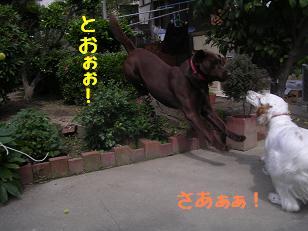 b0113725_12291632.jpg