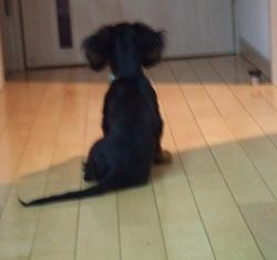 忠犬pinoきち_e0147339_1246254.jpg