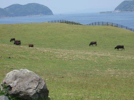 加部島の「かべしま」でイカを食べる!_f0167281_21245618.jpg
