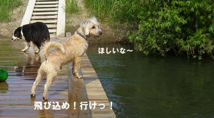 f0114893_8201957.jpg