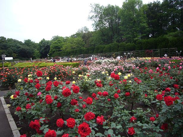 神代植物園 2008,5,20_e0108897_23181674.jpg