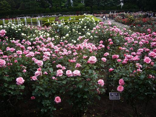 神代植物園 2008,5,20_e0108897_23222177.jpg