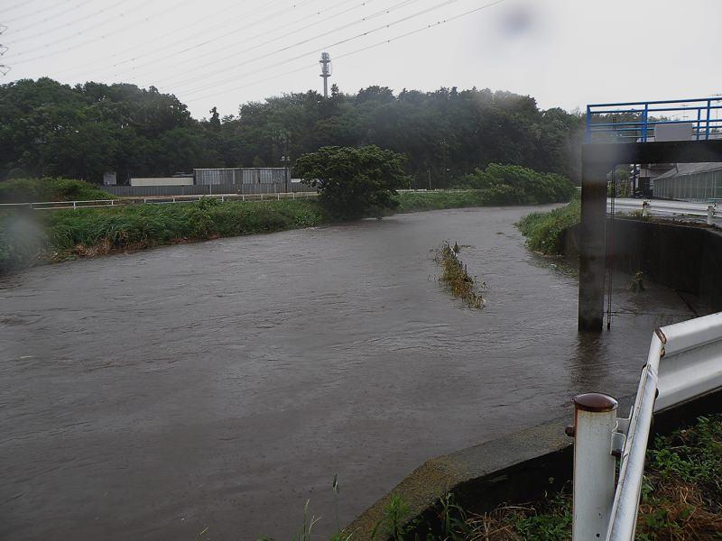 今朝のMFの川は???_b0024798_932122.jpg
