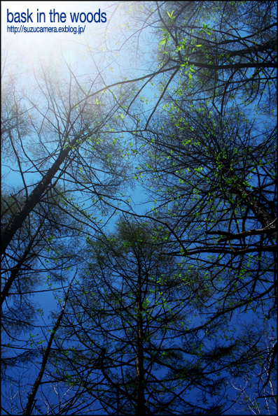 森林浴_f0100215_043043.jpg