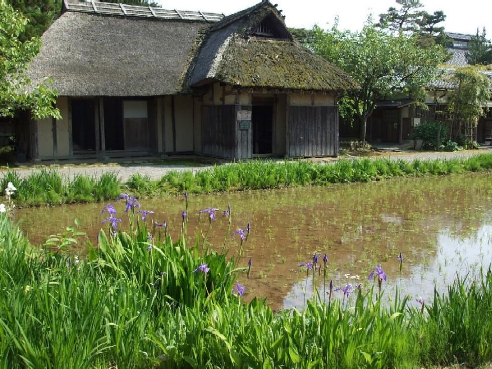 博物館の田んぼにて…_e0135219_16544736.jpg