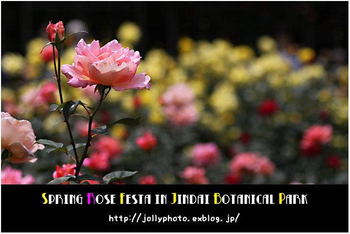 f0167219_3275911.jpg