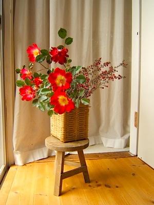 バラのカクテル/花のお裾分け_c0004024_9272572.jpg