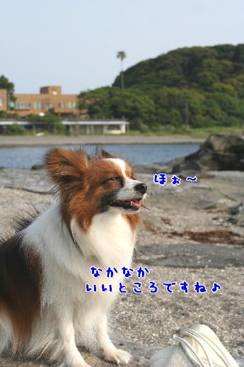 d0013149_1024057.jpg