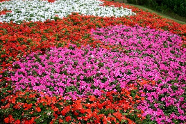 花の美術館へ~その1_d0152261_9532391.jpg