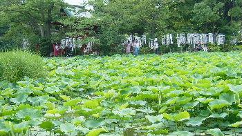 鎌倉旅行2006 ⑭鎌倉とろろ茶屋でランチ_d0029066_7374038.jpg
